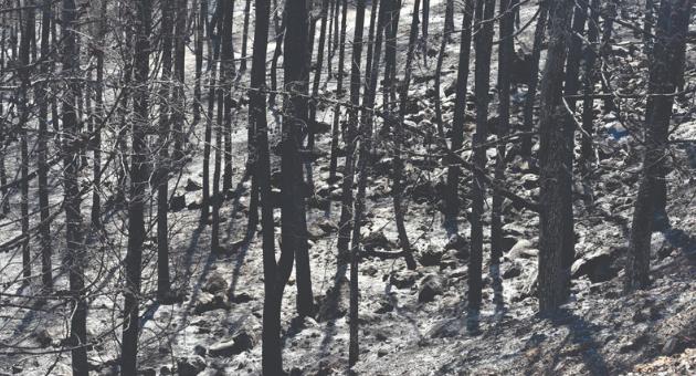 נזקי השריפה ביער צ'רצ'יל