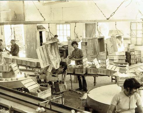 בית האריזה בזמן פעילותו