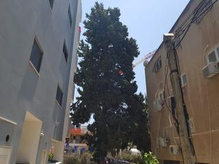 צילום: דוברות עיריית הרצליה